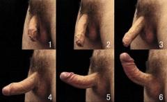 Fáze erekce mužského penisu